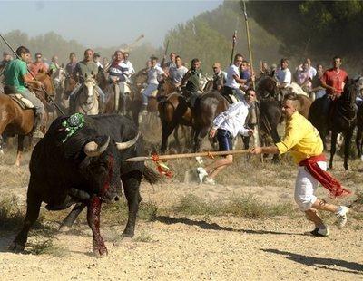 Tordesillas celebrará por tercer año el Toro de la Vega sin dar muerte al animal