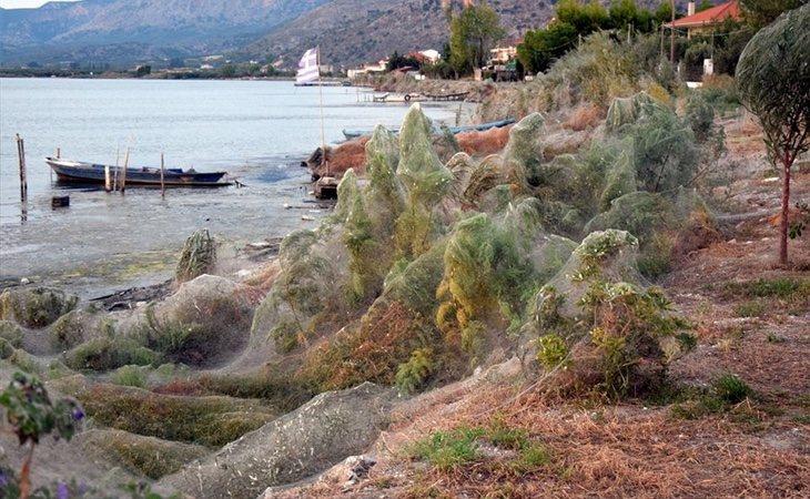 La zona apareció completamente cubierta por una tela de araña gigante
