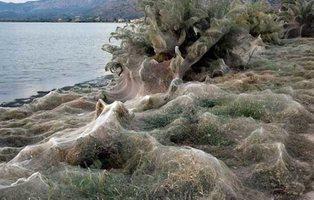 Aparece una gigantesca telaraña de más de 300 metros en una playa de Grecia
