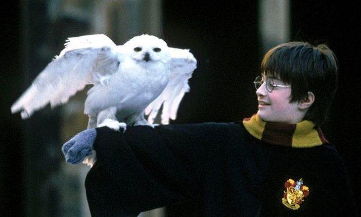 Hedwig falleció