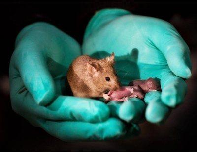 Científicos chinos consiguen que dos ratones del mismo sexo tengan crías