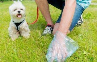 Inventan en China el carné por puntos para los dueños de perros