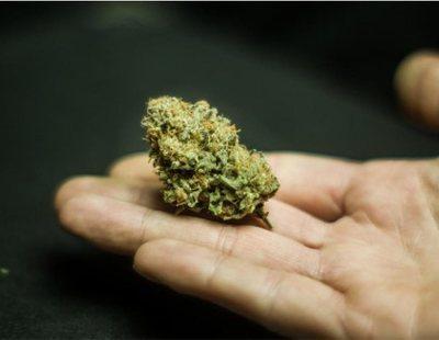 Alterada genéticamente y con efectos muy potentes: Así es la nueva 'marihuana cripy'