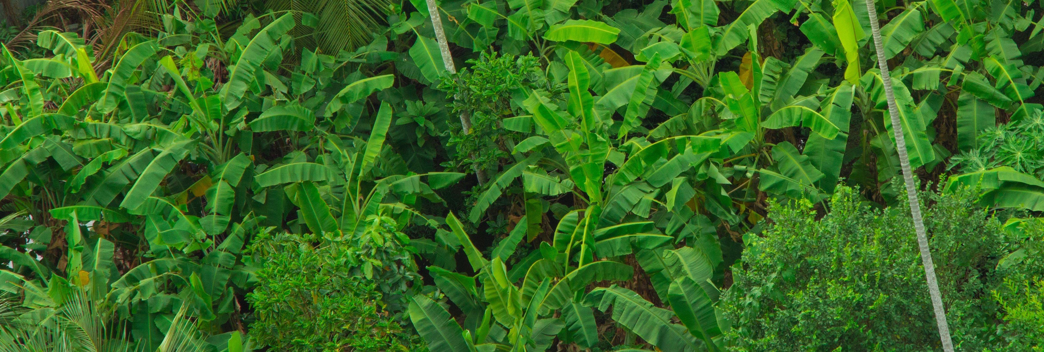 Descubren una especie de araña con cabeza de perro en la selva tropical de Ecuador