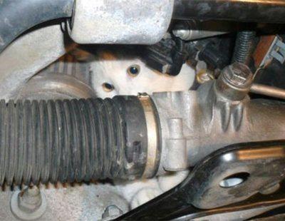 La Policía Nacional avisa: cómo salvar un gato que se ha escondido en el motor de tu coche