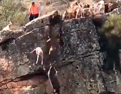 Indignación: Una cacería se salda con 12 perros y un ciervo despeñados por un barranco