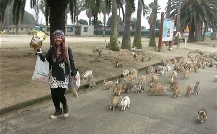 Perros y gatos están prohibidos para preservar el ecosistema de los conejos