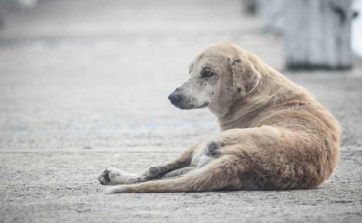 Los perros sufren abusos sexuales