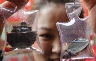 Peces y tortugas vivas se comercializan como llaveros de la suerte en China