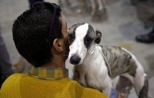 La Rioja multará con hasta 100.000 euros a los dueños que no esterilicen a sus mascotas