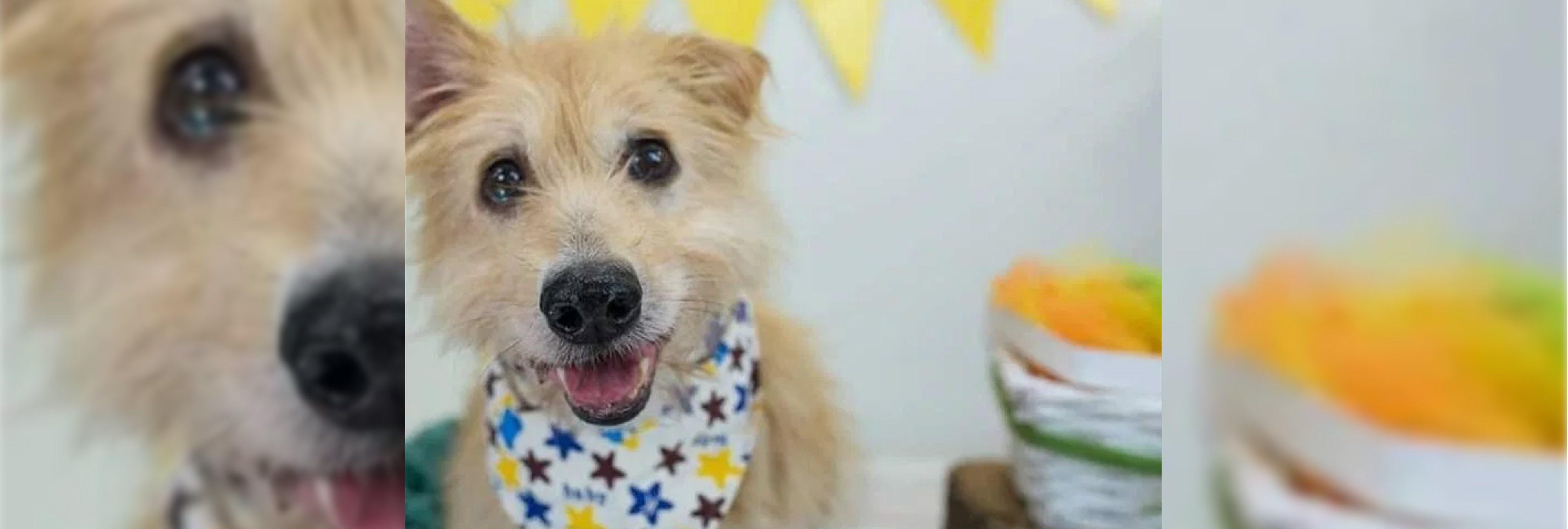 La conmovedora historia de Pincho, el perro esclavizado sexualmente en España durante años