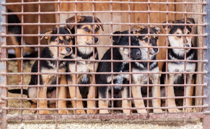 ¡Adopta! Las protectoras están llenas de perros abandonados esperando un nuevo hogar