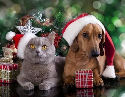¿Por qué una mascota no es un buen regalo de Navidad?