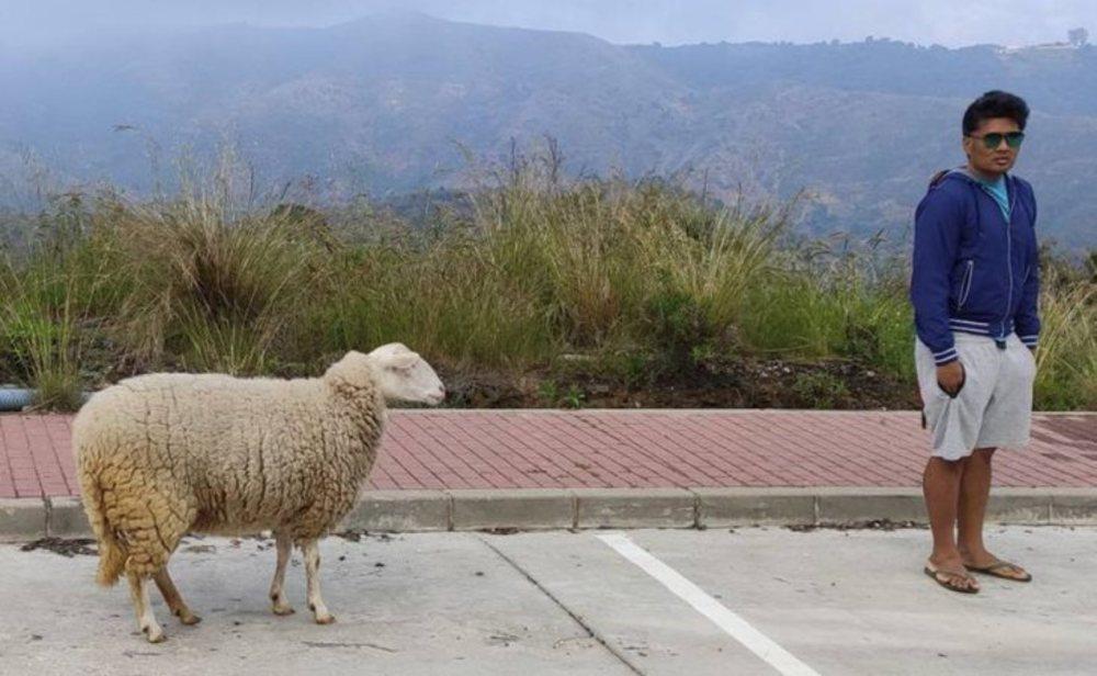 El denunciado junto a la oveja que paseaba