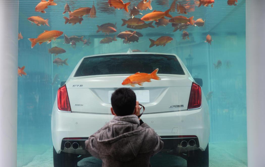 ¿Dónde encontrarías un coche metido en una pecera?