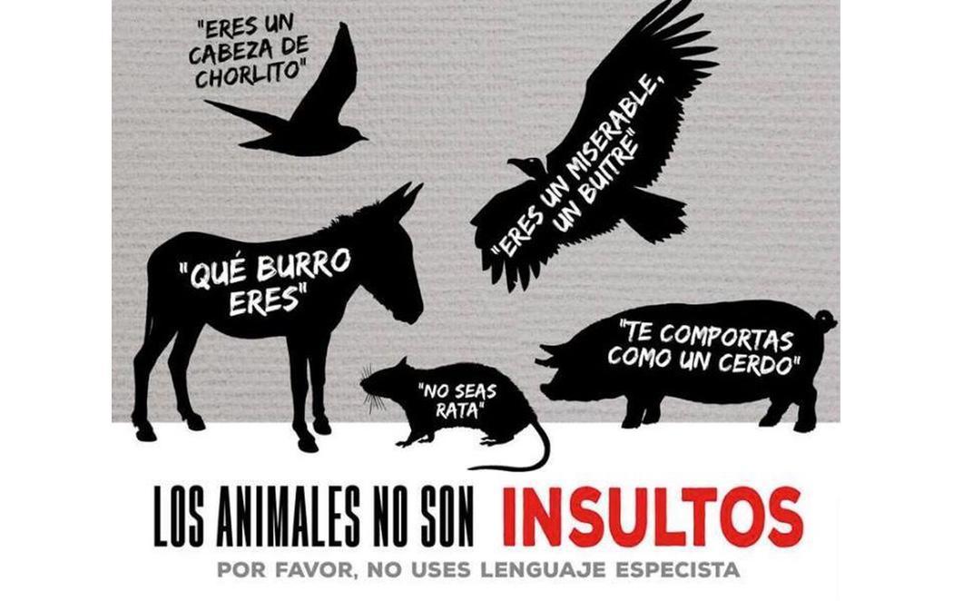Prohibido insultar a los animales: ellos también se ofenden