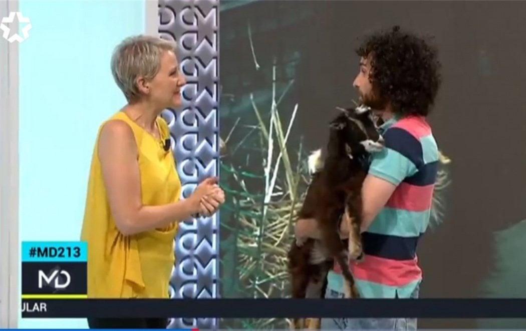 TeleMadrid utiliza una cabra para pronosticar la victoria de Pablo Casado