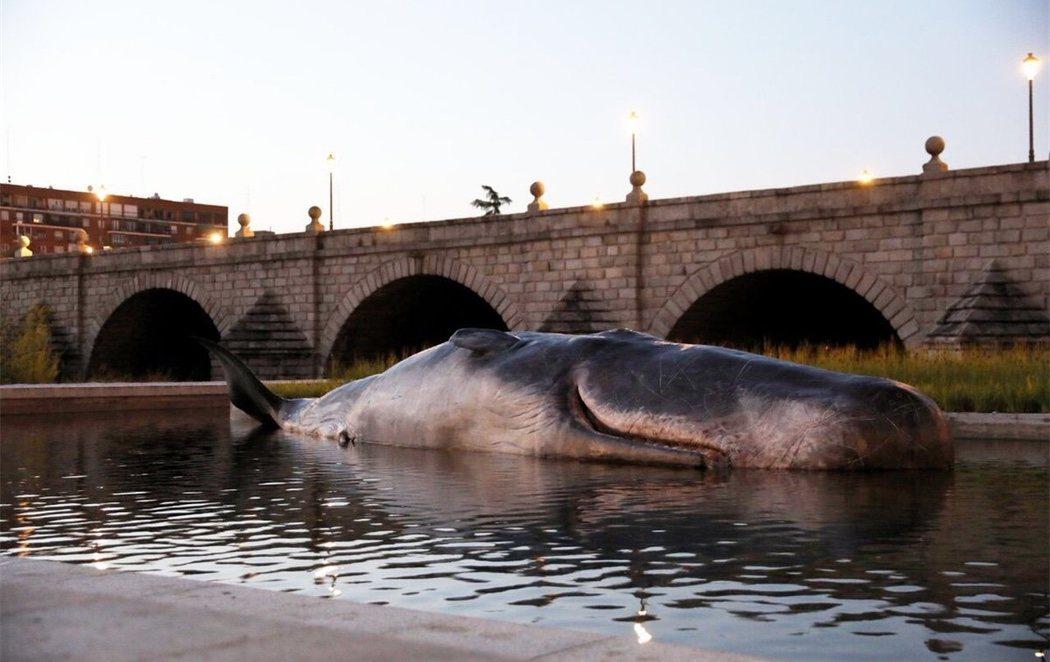 El Ayuntamiento de Madrid posa una ballena en el Manzanares para visibilizar el cambio climático