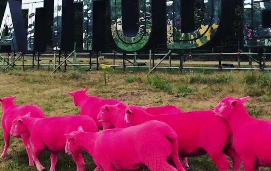 Acusan al Latitude Festival de maltrato animal por teñir ovejas para hacer promoción