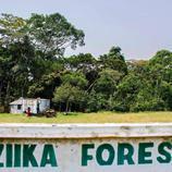 El bosque Zika