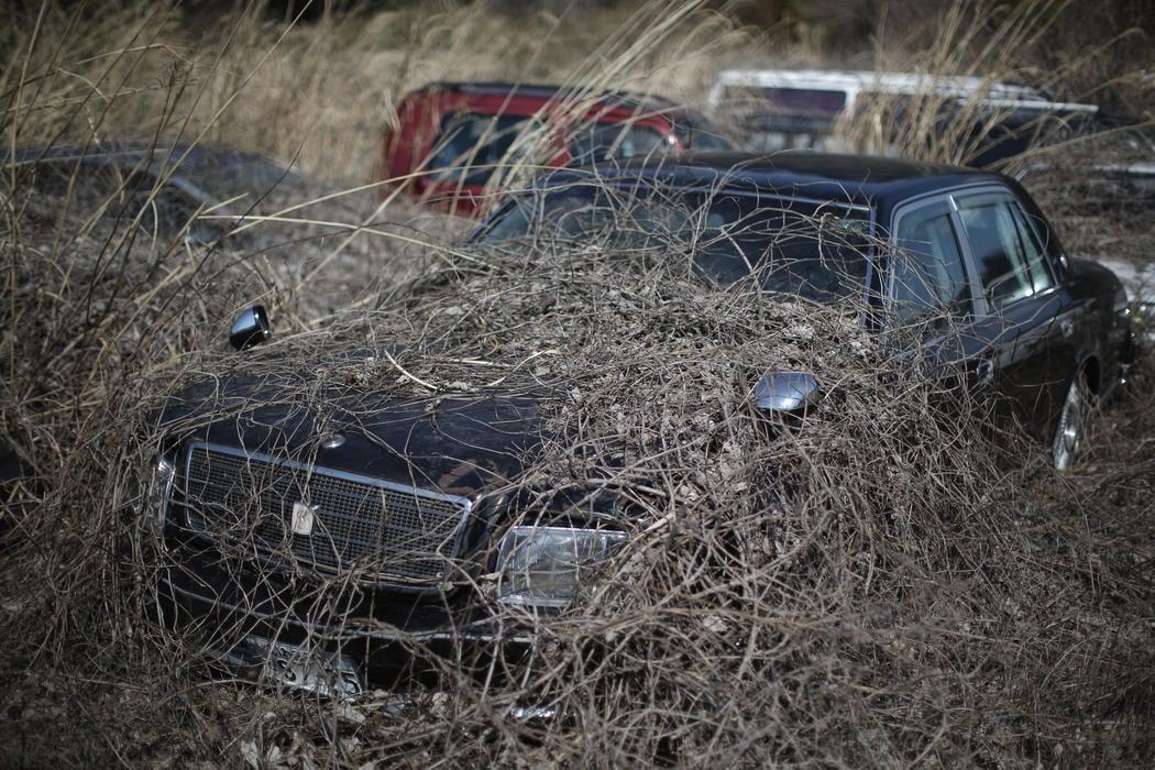 La naturaleza crece sobre los coches dejados de un parking