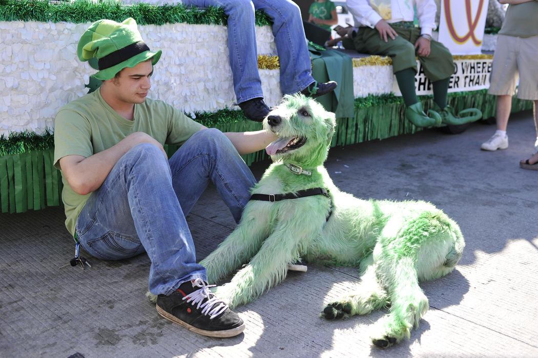 Un perro se tiñe de verde para celebrar San Patricio en Chicago