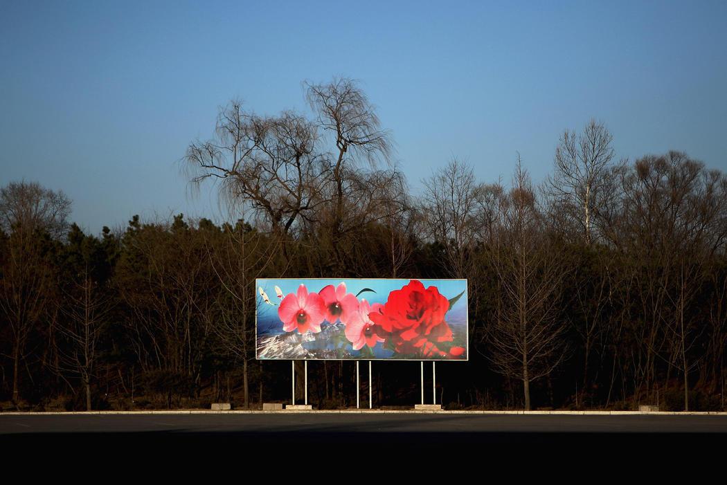 La kimilsungia, la flor del país
