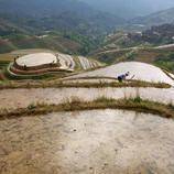 Extensos campos de arroz en China