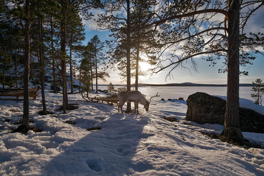 El Ártico, un paraíso helado