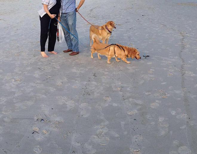 El perro ciempiés