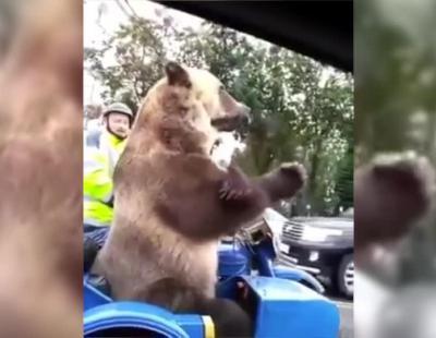 Expectación en Rusia por un oso recorriendo las calles con su moto
