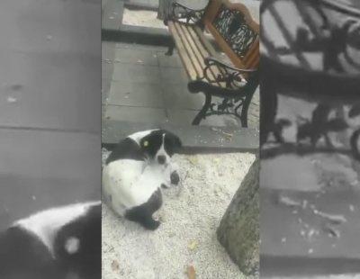 Un hombre se reencuentra con su perro después de tres años separados